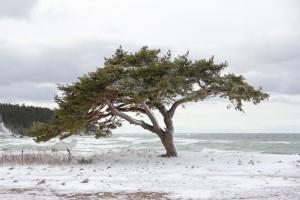 vinter-ihreviken