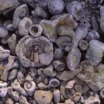 fossiler